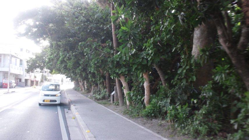 宮里前の御嶽のハスノハギリ林