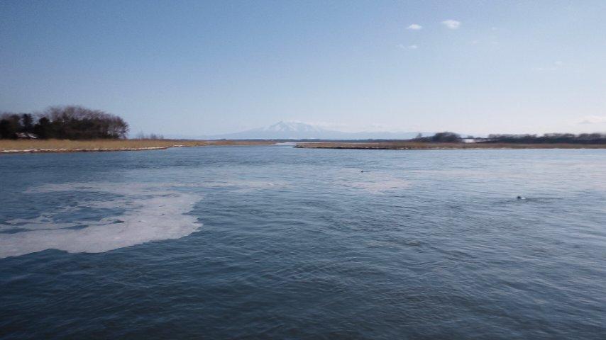 濤沸湖と白鳥