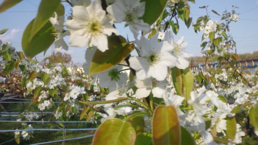 桜の次は?