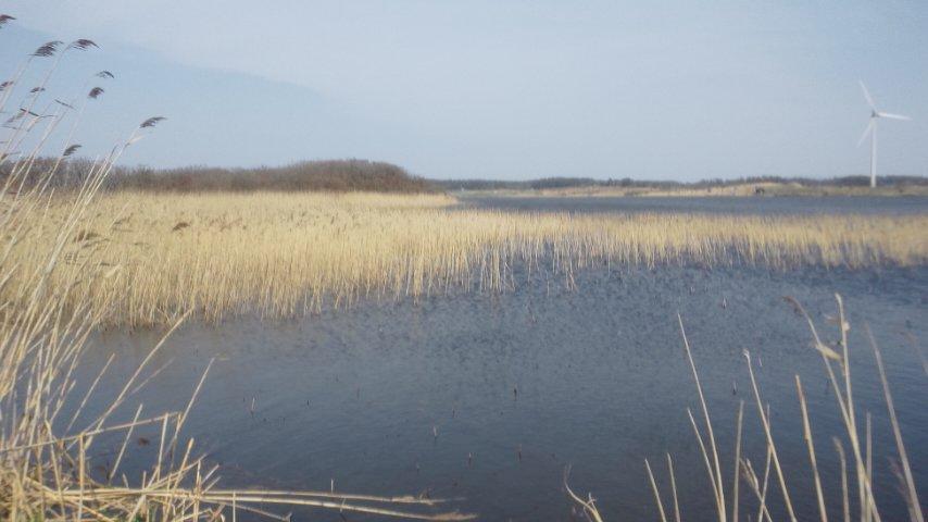 ベンセ湿原